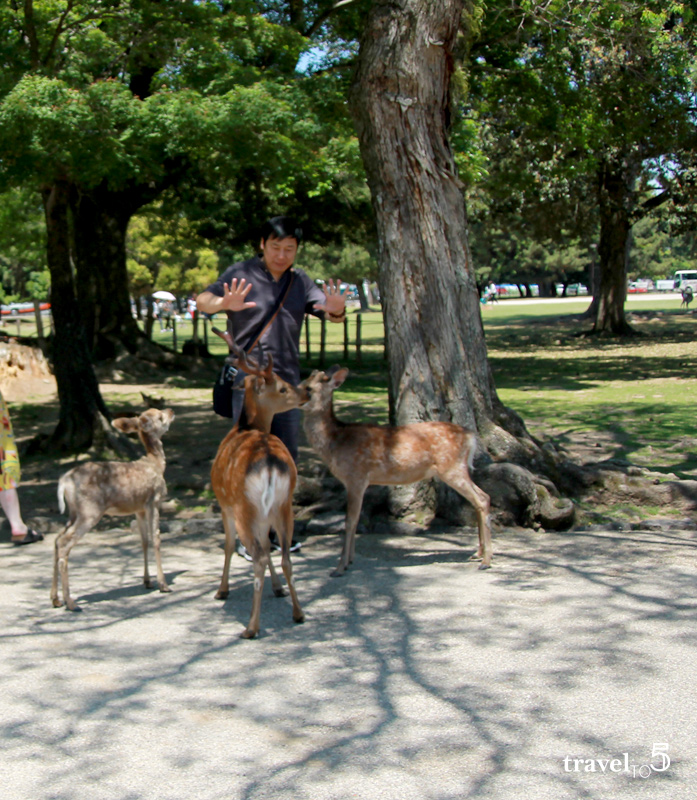 Nara koen park - top things to do in Nara